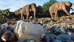 Sri Lanka battles to stop elephants...