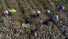 US blocks imports of Xinjiang slave labor cotton
