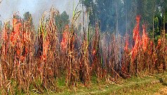 Gaibandha sugarcane farmers set crop on fire in protest