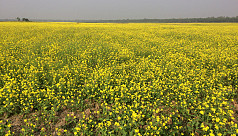 Country eying bumper mustard...