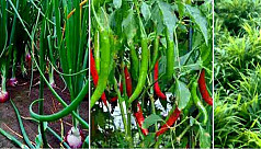 Farmers reaping benefit from spicy crop...
