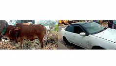 Man detained while stealing cow by a...