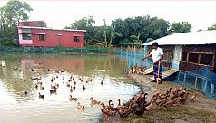 Composite farming brings smiles on faces of fish growers in Rajshahi