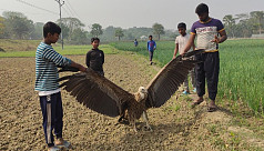 Youths rescue rare vulture in...