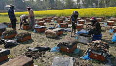 Tangail farmers busy cultivating honey...