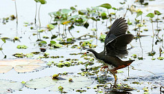 In pictures: Wings of wetland