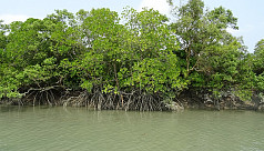 ED: A cry for help from the Sundarbans