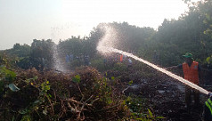 Sundarbans saw 31 fires in 19 years