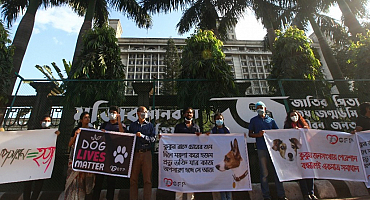 Animal rights activists: Do not ruin our years of work for animal welfare